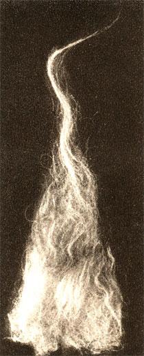 Жёсткий волос в шерсти